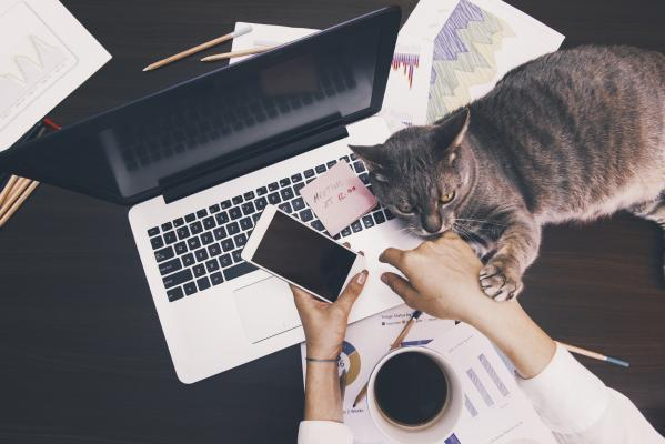 person working on  laptop with cat on the keyboard