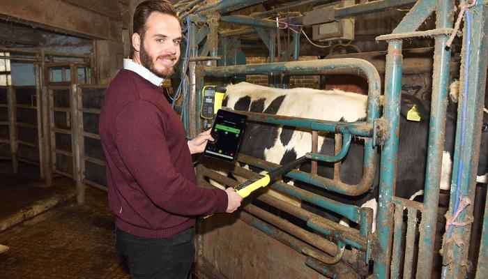 Ian Sturmer, Breedr farmer, in crush