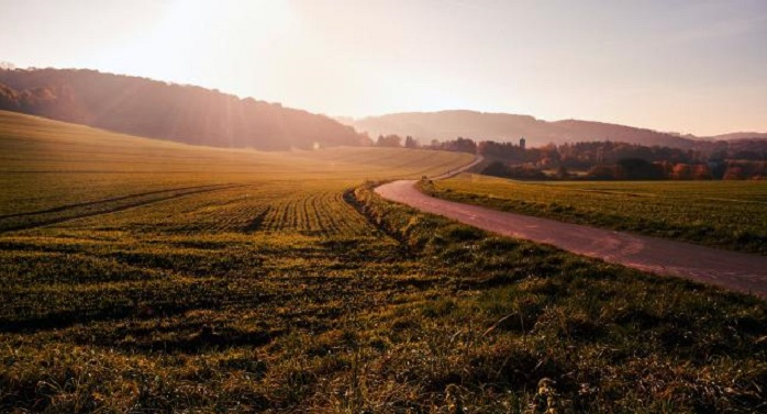 field in sunshine