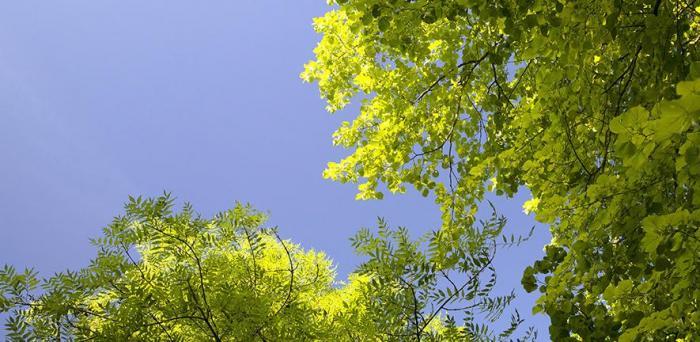 Trees against a blue sky