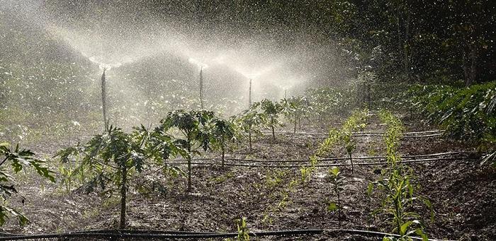 Crops being watered  Credit: Philip Junior Male on Unsplash