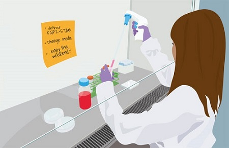 Lab worker illustration_ Qkine to make Enantis FGF2-STAB (FGF2-G3) for weekend-free stem cell culture