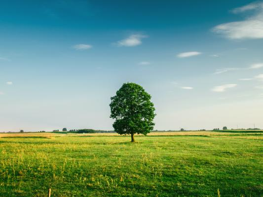 green field with tree on the horizon