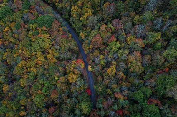 Road through multicoloured vibrant forest