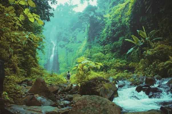 Hiker walking through lush green landscape